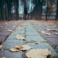 Осень осень.. :: Катерина Свердлова