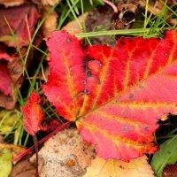 Осенний лист :: Дмитрий Арсеньев