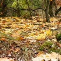 Осенний лес :: Ирина Лапина