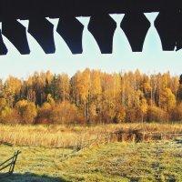 Осень за околицей... :: Елена Швецова