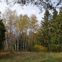 Островок березовый в лесу. :: *MIRA* **
