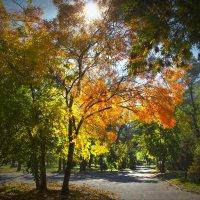 золотая осень :: сергей навроцкий