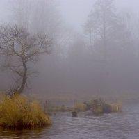 старое озеро :: Миша…. просто Миша салавянчик