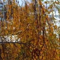 Дождь за окном :: Татьяна Нижаде
