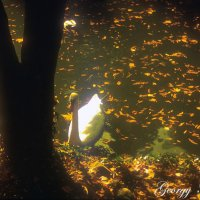 Золотая осень :: Georgy Kalyakin