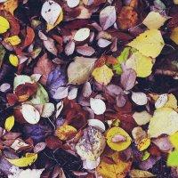 листья :: Tasha