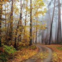 Последний осени туман... :: Лесо-Вед (Баранов)