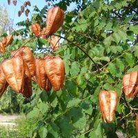 Осеннее дерево :: super-krokus.tur ( Наталья )