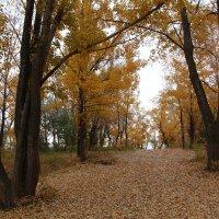 Осень :: Dr. Olver  ( ОлегЪ )