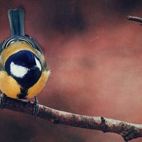 Птичка :: Вера Арасланова