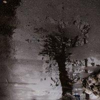 Дерево.... :: Zuko