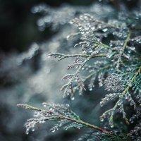скоро зима :: Дашка Сергевна