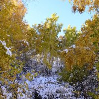 В осеннем лесу :: galina tihonova