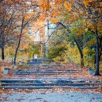 Осенняя прогулка :: Елена Остапова