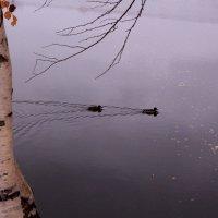 На озере :: Татьяна Ломтева