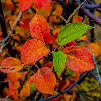 Осени краски :: Дмитрий Тарарин