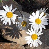 Нежные краски сентября. :: Весна .