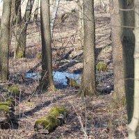 Весной в лесопарке... :: Геннадий Александрович