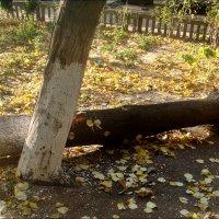 Последняя осень... :: Нина Корешкова