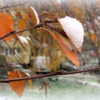 "Из серии ""Он и она "" (снег и берёза ). :: Мила Бовкун"