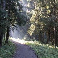 Утро в лесу :: Екатерина Ковалева
