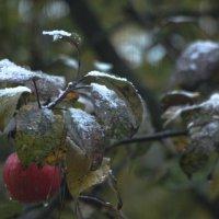 Первый снег... :: veilins veilins