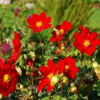 цветы осени :: linnud