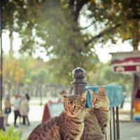 Стамбульские коты :: Ирина Лепнёва