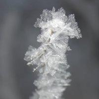 Зимняя сказка :: Надежда Круглова