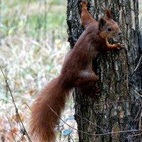 Из жизни лесных белок Фото №4 :: Владимир Бровко