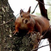 Из жизни лесных белок Фото №5 :: Владимир Бровко