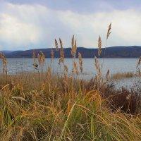 Трава у озера. :: Наталья Юрова