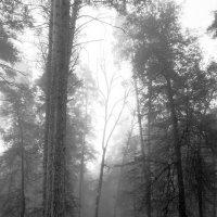 Туман. Осень. :: Валерия  Полещикова