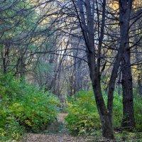 Осенний лес! :: Аня Лакина