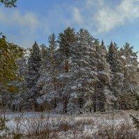 зимний пейзаж. :: михаил скоморохов
