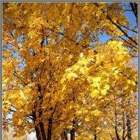 Золотая Осень!!! :: Tatiana Kretova