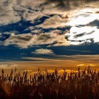 Перистые облака :: Анатолий Клепешнёв