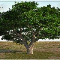 Дерево :: Юлия Z