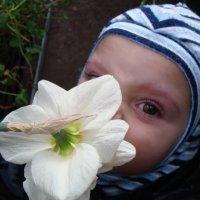 Знакомство с цветами ... :: laana laadas