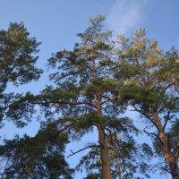 лес :: Елизавета Кудашева