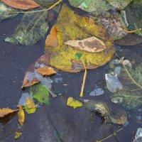 Зимние листья :: Ольга Крулик