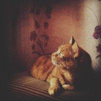 мой кот :: юлия *****