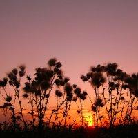 Запуталось солнце в высокой траве :: Тамара