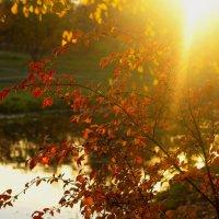 лучи осеннего солнышка :: Tasha