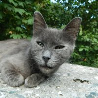 Странный кот :: Igor Gruzdev