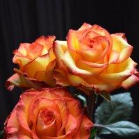 Розы :: Софья Оганова