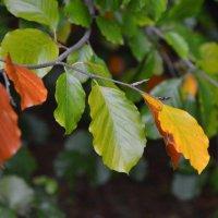 Осень :: Жанетта Лазарь
