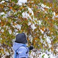 осень-зима :: Светлана