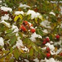 Первый снег. :: Марк Васильев