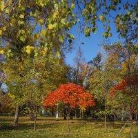 Осенний цвет :: Анатолий Толстопятов